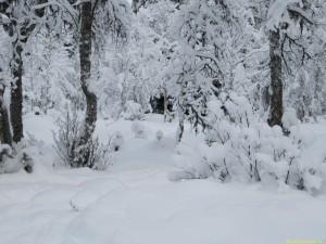 Över 50 cm snö