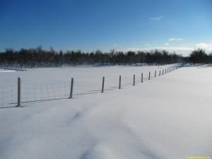Gränsstängsel söderut