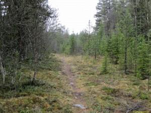 Sven-Olovs stig