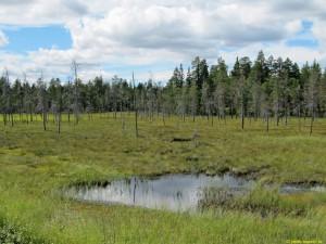 Myr i närheten av Skärvagsjön
