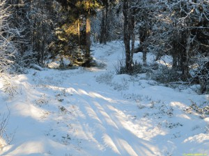 Skapligt med snö i spåren!