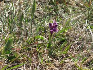 Orkidéer på G