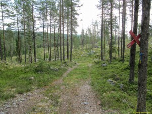 Strax här efter tätnar skogen och jag vände...